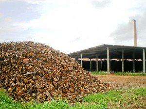 Brazil Biomass 1