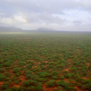 Kenya REDD